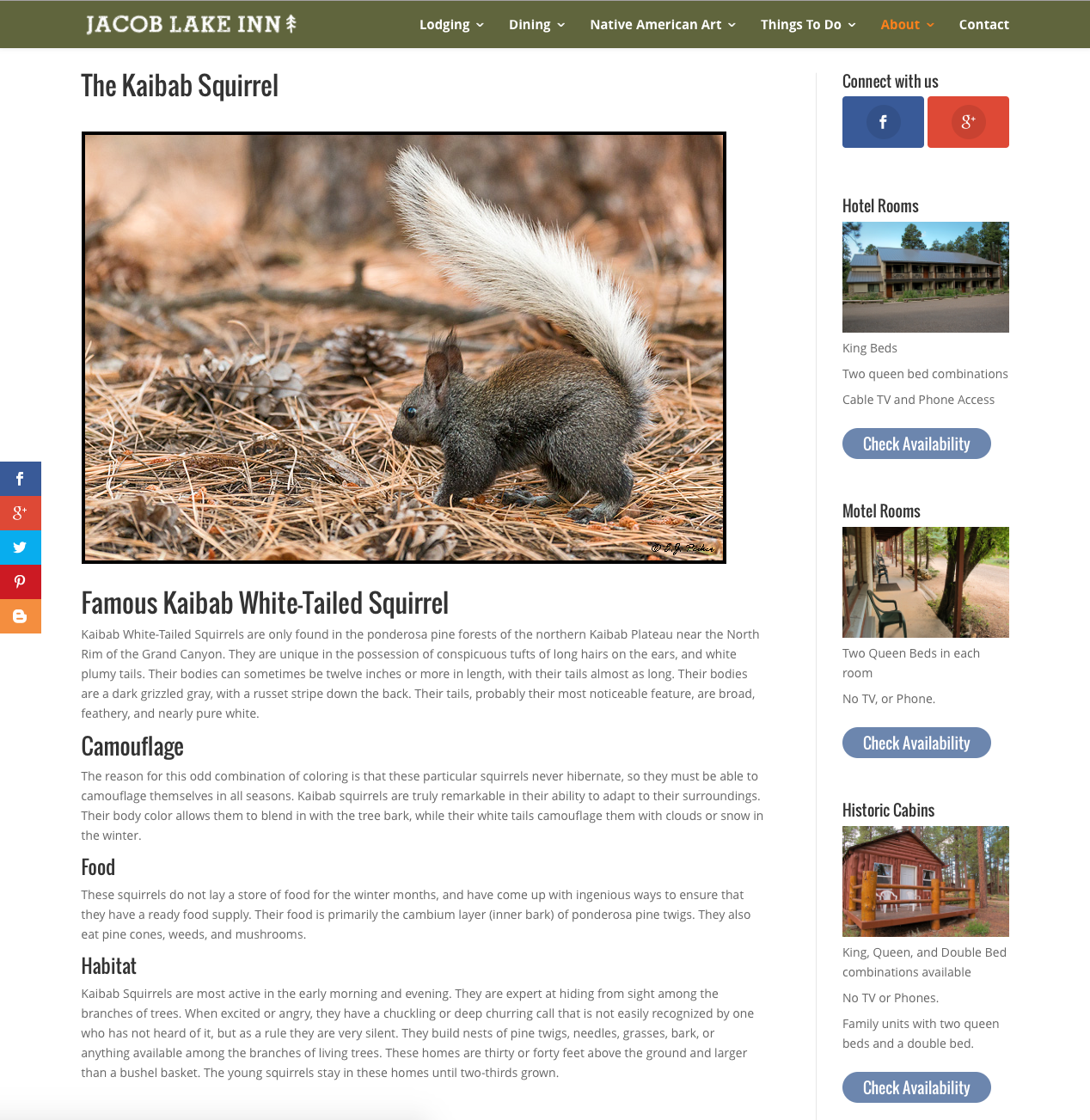 The Kaibab Squirrel Page